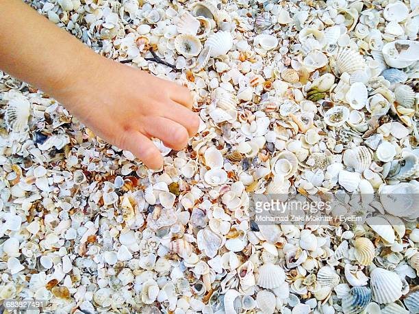 Cropped Image Of Person Hand On Fallen Leaves During Flower