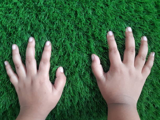 Cropped Image Of Person Hand On Grass Field