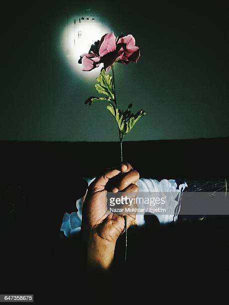 cropped image of person holding flower at home - nazar stock photos and pictures