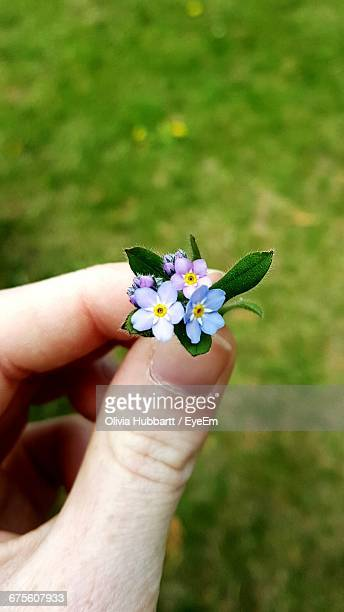 Cropped Image Of Person Holding Forget-Me-Not Against Field