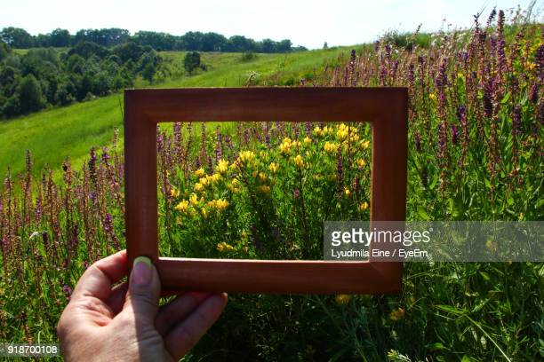 cropped image of person holding frame by flowers against sky - eine person stock pictures, royalty-free photos & images