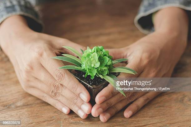 Cropped Image Of Person Holding Small Potted Plant On Table
