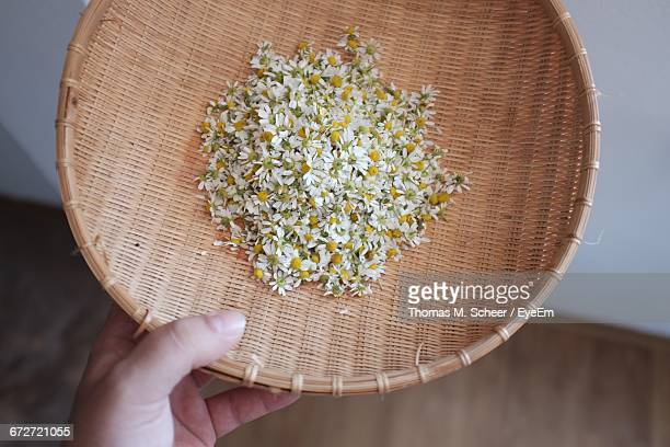 Cropped Image Of Person Holding Wicker Container With Chamomile Flowers