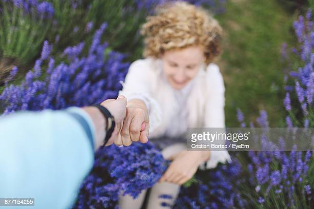 cropped image of person holding woman hand at lavender field - bortes stock pictures, royalty-free photos & images