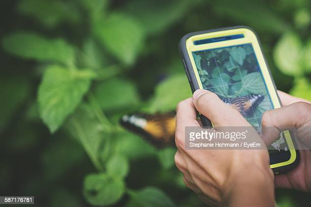 cropped image of person photographing butterfly through smart phone - fotohandy stock-fotos und bilder