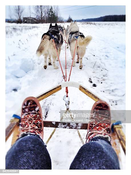 cropped image of person sitting on sled dogs - dogsledding stock photos and pictures