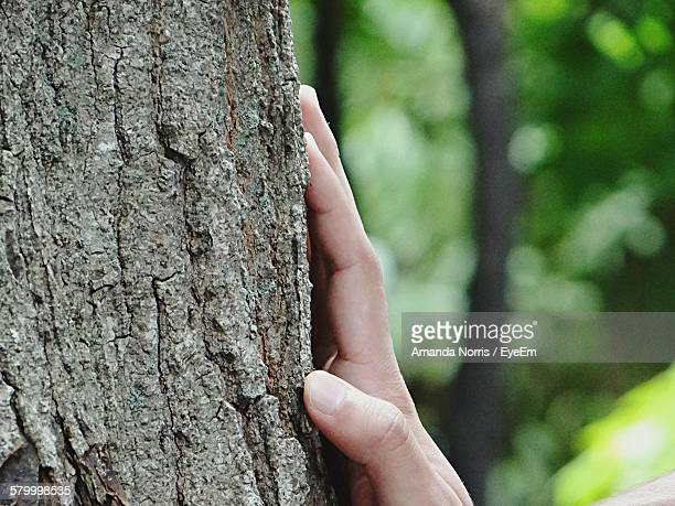 Cropped Image Of Person Touching Tree