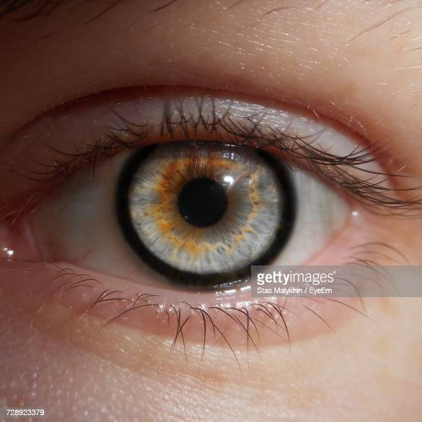 cropped image of person with gray eye - grey eyes stock pictures, royalty-free photos & images