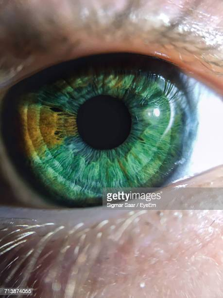 cropped image of person with green eyes - green eyes stock pictures, royalty-free photos & images
