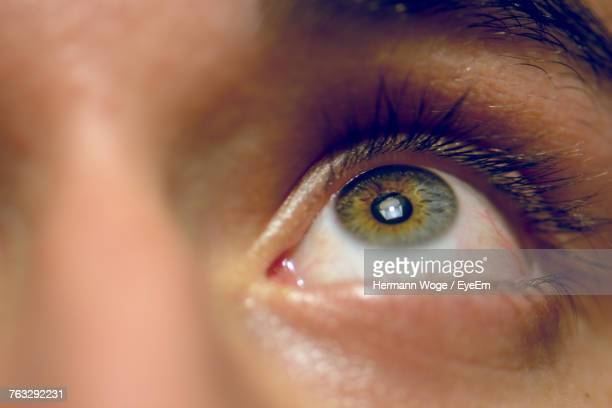 cropped image of person with hazel eyes - iris eye stock pictures, royalty-free photos & images
