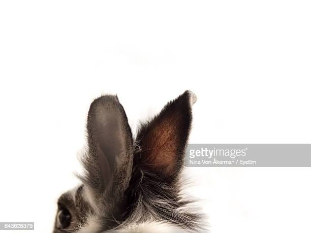 Cropped Image Of Rabbit Against White Background