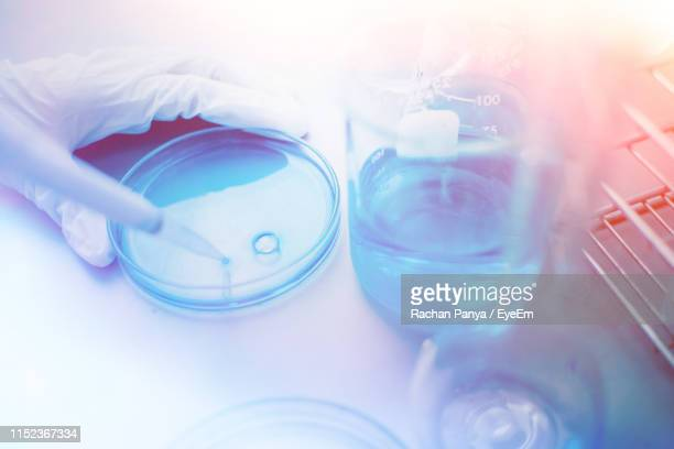 cropped image of scientist holding petri dish and pipette - petrischale stock-fotos und bilder