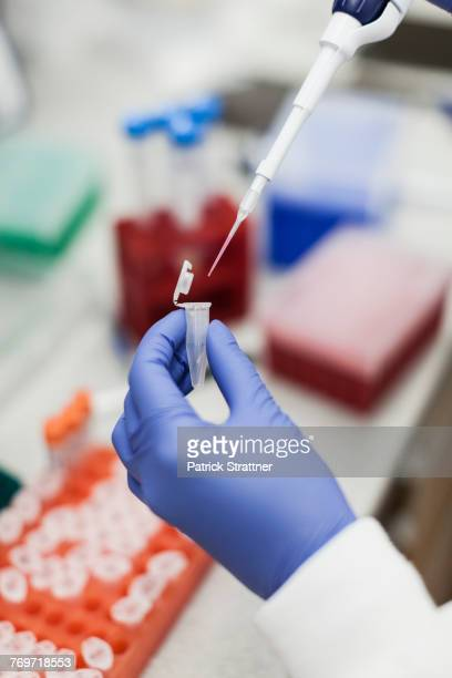 cropped image of scientist pouring liquid into vial at laboratory - purple glove stock pictures, royalty-free photos & images
