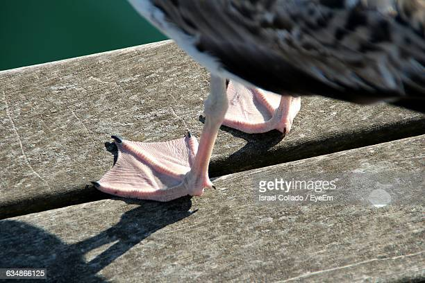 Cropped Image Of Seagull On Pier Over Sea