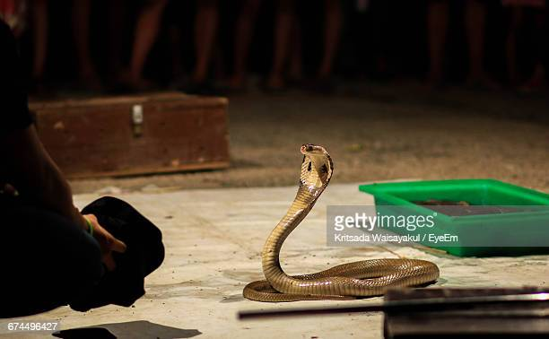cropped image of snake charmer crouching by cobra on street - king cobra stock photos and pictures