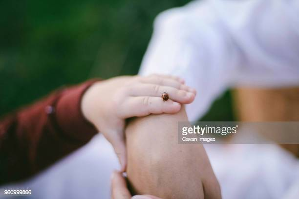 cropped image of son with ladybug touching mothers hand - coccinella foto e immagini stock