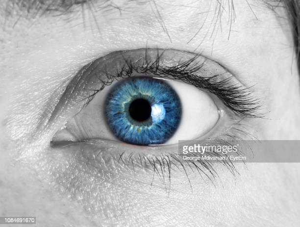 cropped image of woman eye - blue eyes stock pictures, royalty-free photos & images
