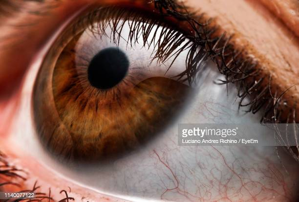 cropped image of woman eye - brown eyes stock photos and pictures