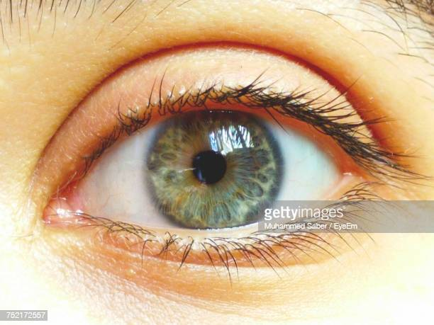 cropped image of woman eye - hazel eyes stock pictures, royalty-free photos & images