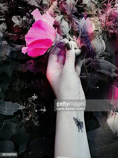 Cropped Image Of Woman Hand Holding Flower