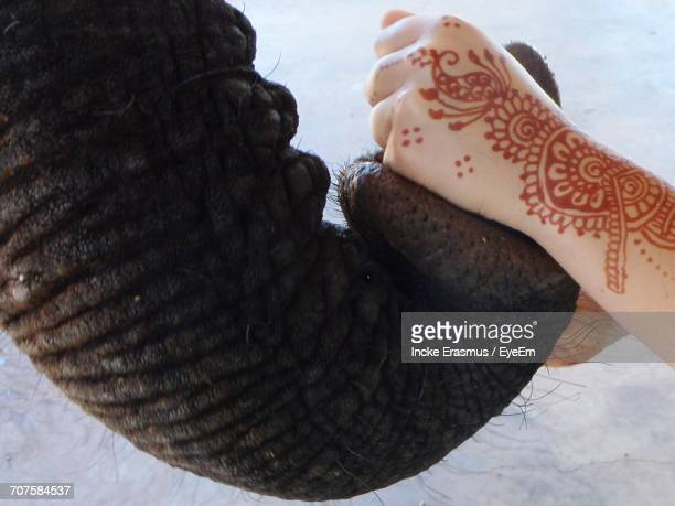 Cropped Image Of Woman Hand With Tattoo Holding Elephant Trunk