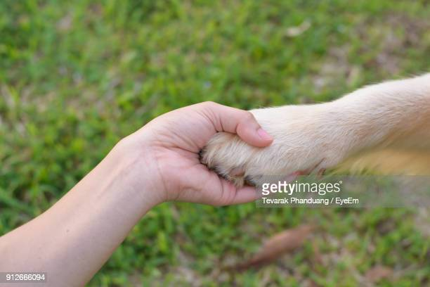 cropped image of woman holding dog on grass field - paw stock pictures, royalty-free photos & images