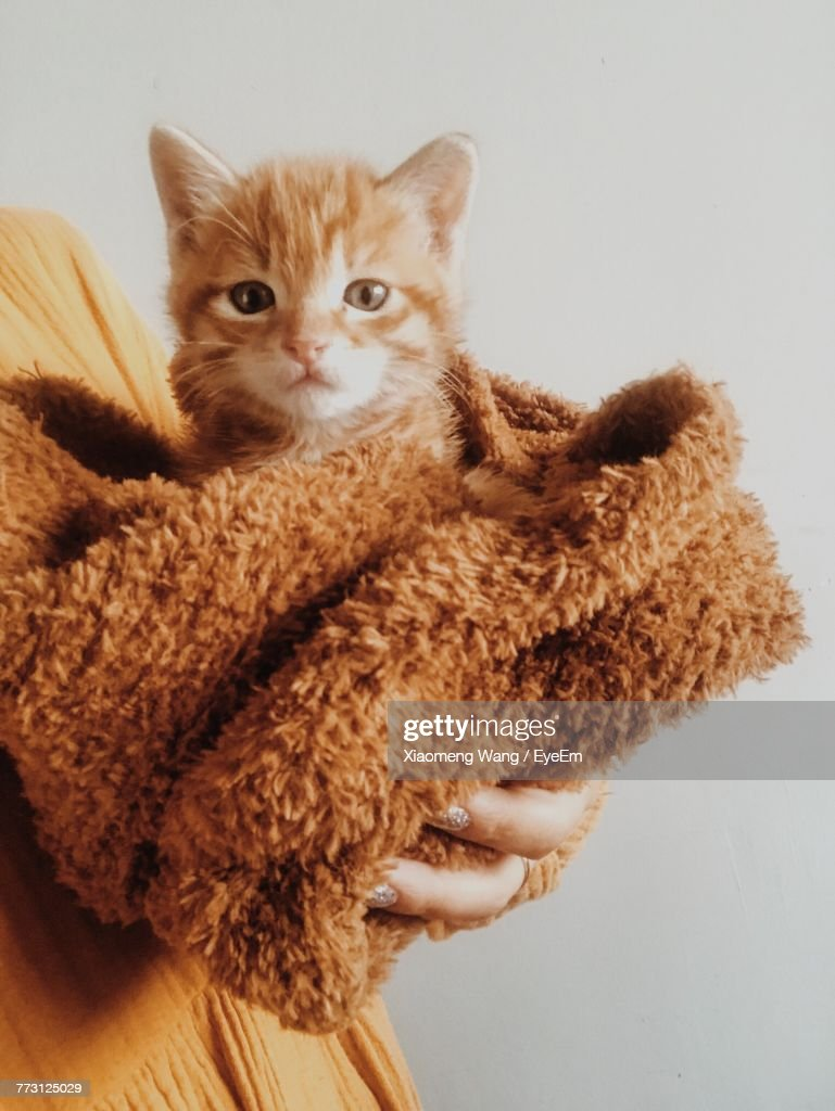 Cropped Image Of Woman Holding Kitten In Towel Against Wall : Photo