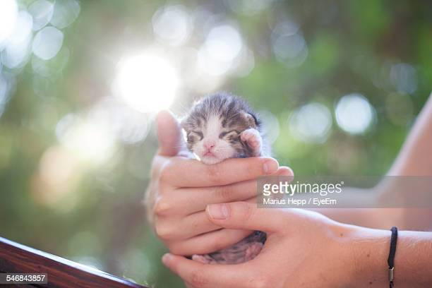 cropped image of woman holding kitten - gattini appena nati foto e immagini stock