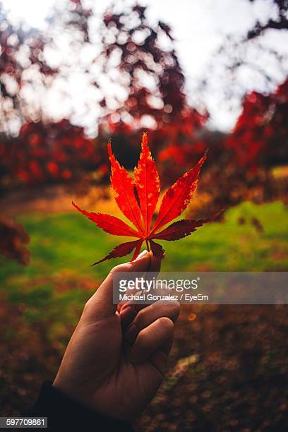 Cropped Image Of Woman Holding Red Autumn Leaf In Park