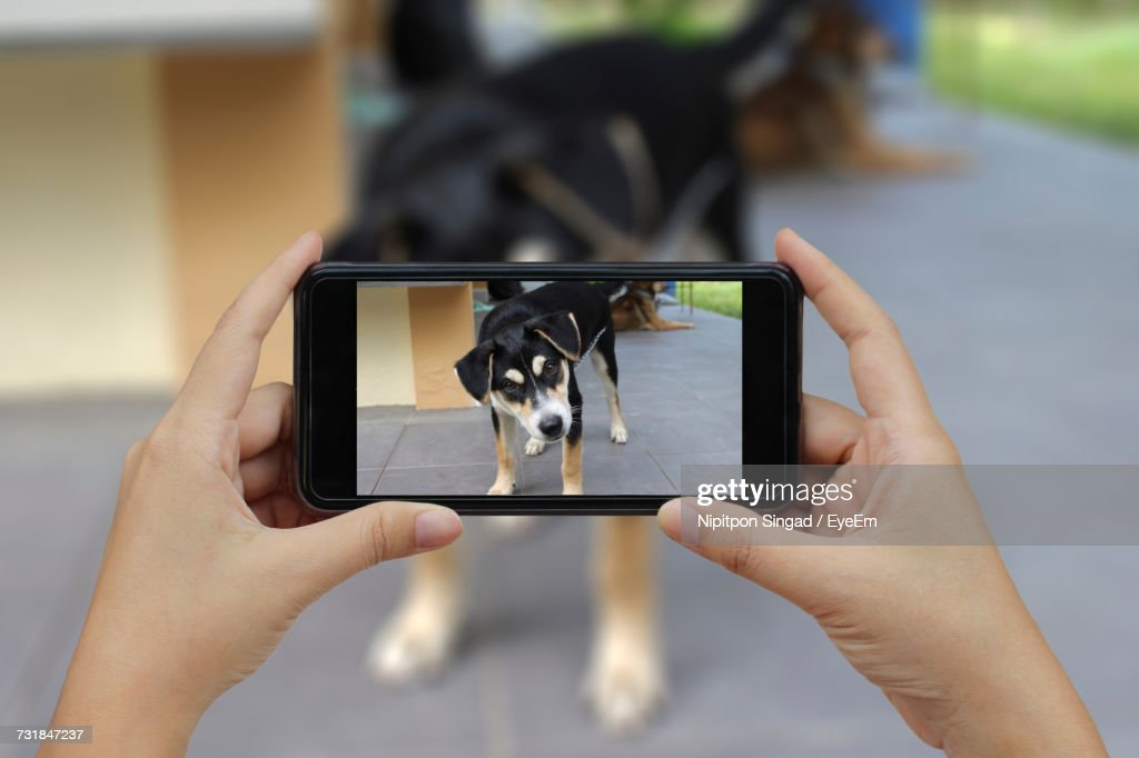 Cropped Image Of Woman Photographing Dog Through Smart Phone : Stock Photo