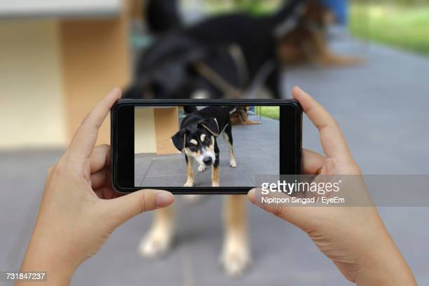 Cropped Image Of Woman Photographing Dog Through Smart Phone