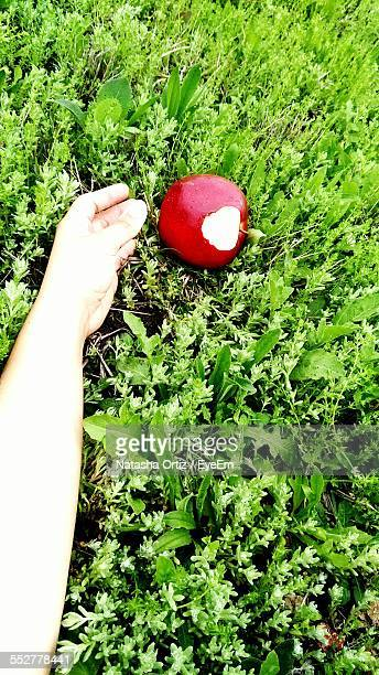 Cropped Image Of Woman Reaching For Eaten Apple On Grassy Field