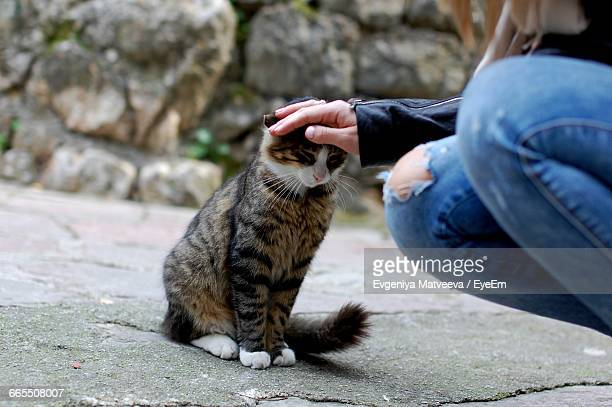 cropped image of woman stroking cat on footpath - trail of tears stock photos and pictures
