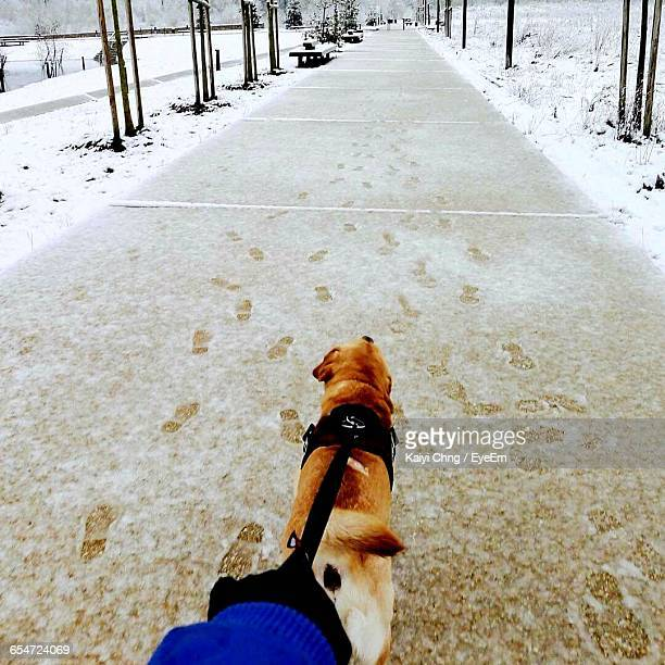 Cropped Image Person With Dog Walking On Snow Covered Footpath