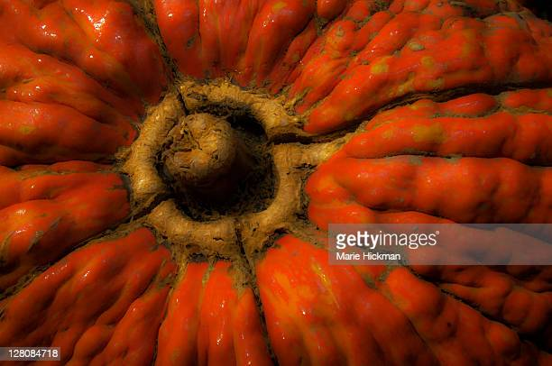 cropped photo of an ugly, lumpy, orange pumpkin - ugly pumpkins stock photos and pictures