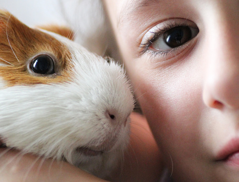 Cropped Portrait Of Boy With Guinea Pig At Home - gettyimageskorea