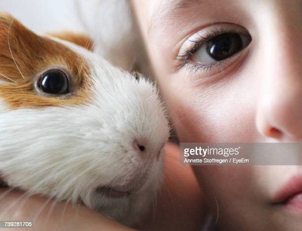 cropped portrait of boy with guinea pig at home - guinea pig stock pictures, royalty-free photos & images