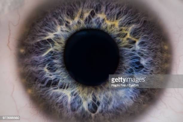 Cropped Portrait Of Human Eye