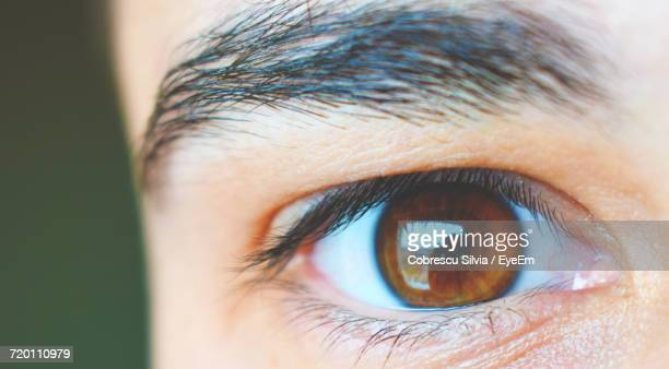 cropped portrait of person - brown eyes stock pictures, royalty-free photos & images
