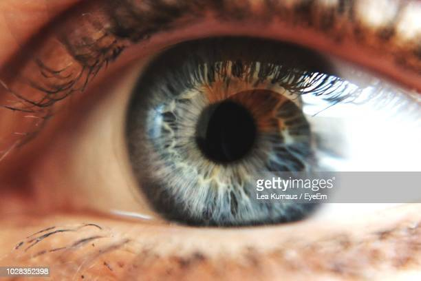 cropped portrait of woman eye - extreme close up stock pictures, royalty-free photos & images
