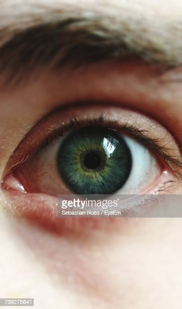 cropped portrait of woman eye - green eyes stock pictures, royalty-free photos & images