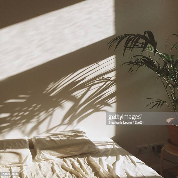 cropped potted plant with shadow against the wall - schaduw stockfoto's en -beelden