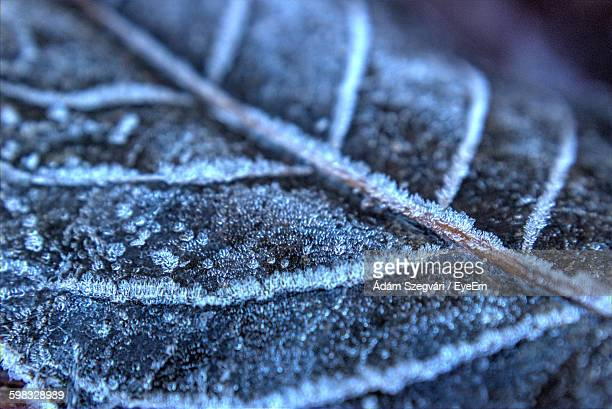 Cropped Shot Of Frost On Leaf