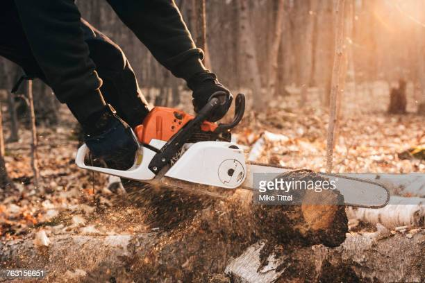 Cropped shot of man chainsawing tree trunk on autumn forest floor