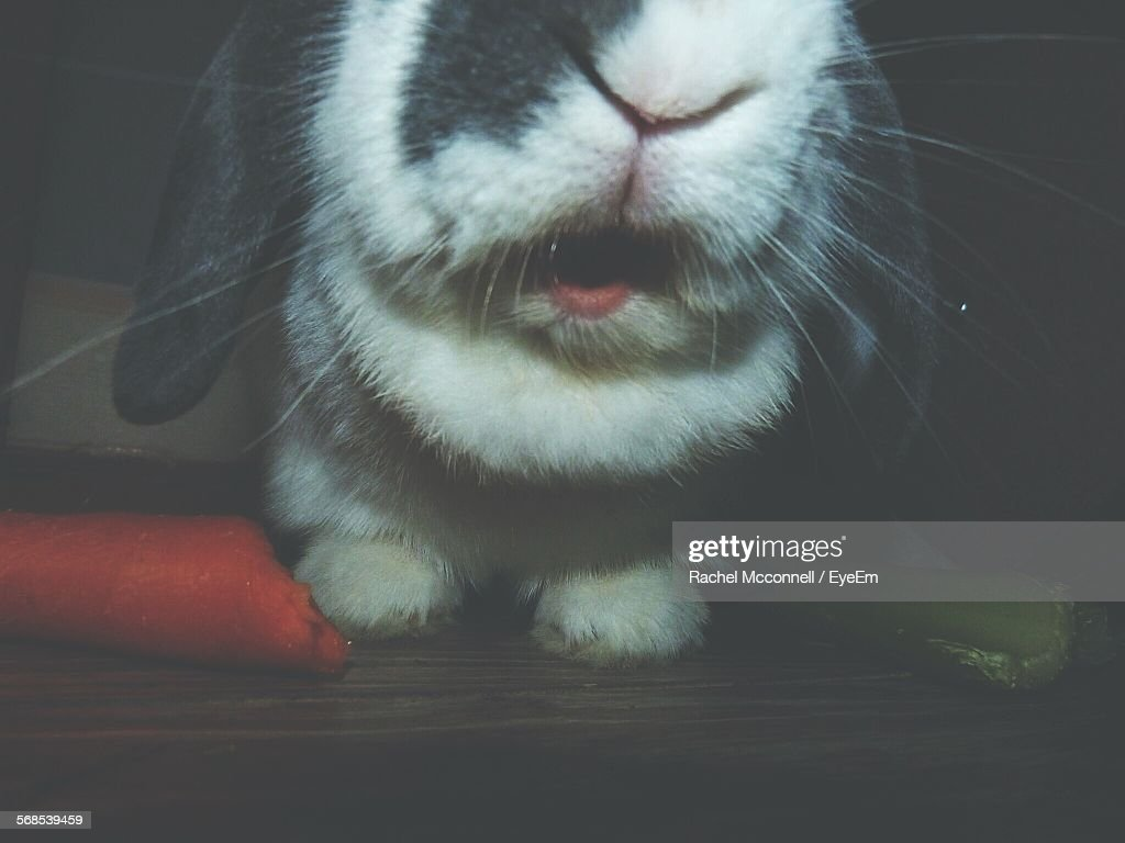 Cropped Shot Of Rabbit With Carrot : Stock Photo