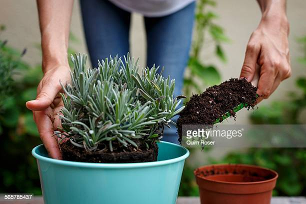 cropped view of hands using trowel to add soil to potted plant - potting stock pictures, royalty-free photos & images