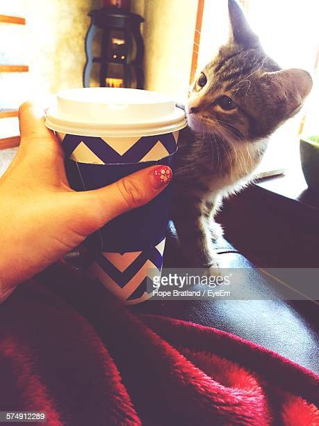 Cropped Woman Hand Holding Disposable Coffee Cup With Tabby Kitten