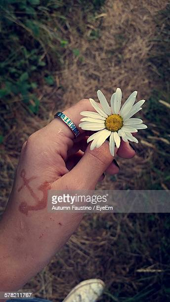 Cropped Woman Holding Fresh White Daisy