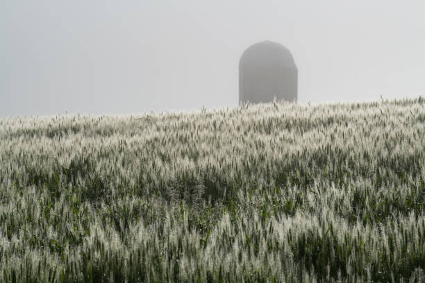 Crops and Farms in America's Heartland