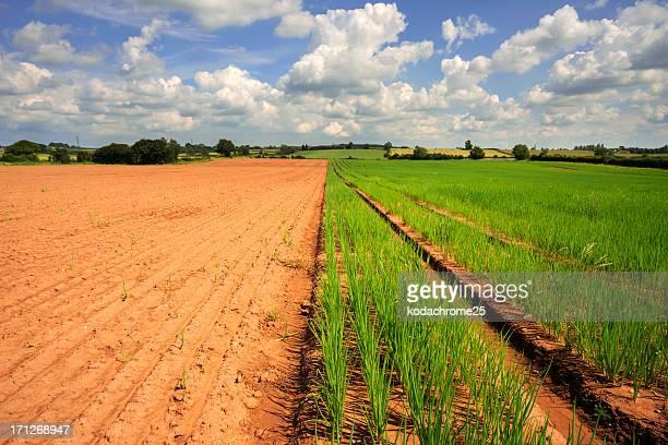 crops Landschaft